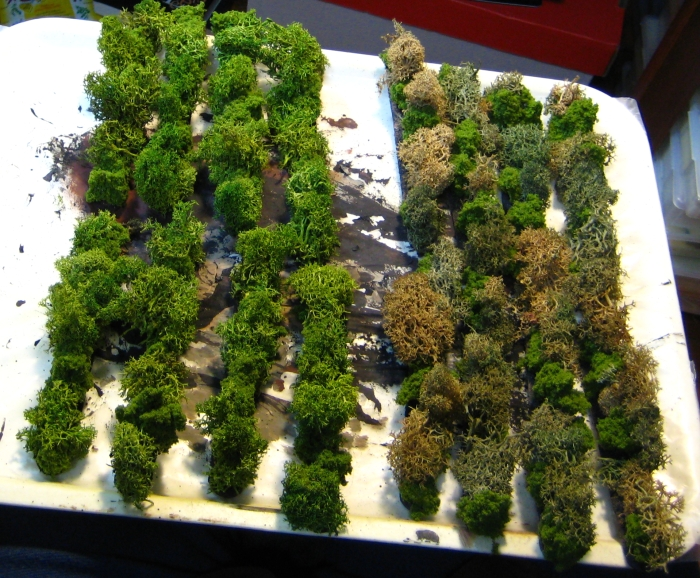 hedge6
